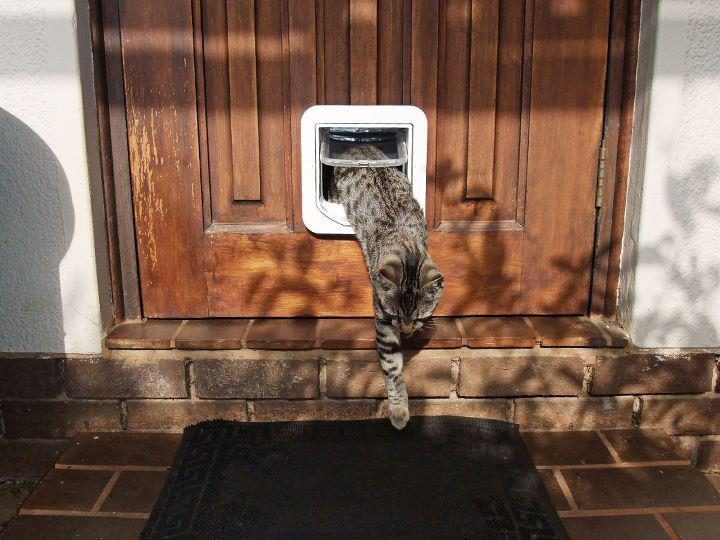 Make Your Pets Safer Top Cat Flaps
