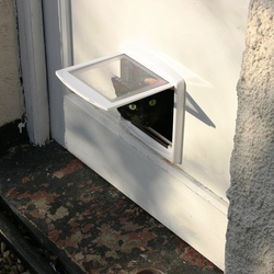 Cat flap in a wooden door