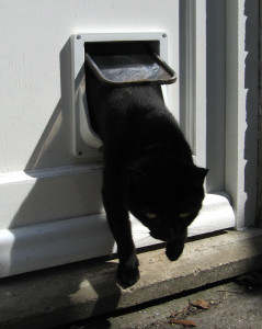 Cat_flap wooden door