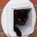 cat flap installation in brick wall