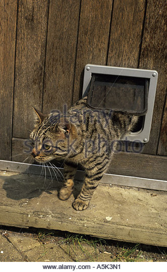 Find Cat Flap Fitters In Your Area Top Cat Flaps