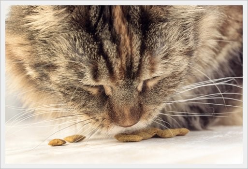 tabby cat eating dry food treats