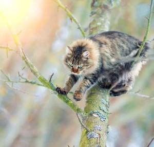 Fluffy tabby cat climbing in tree