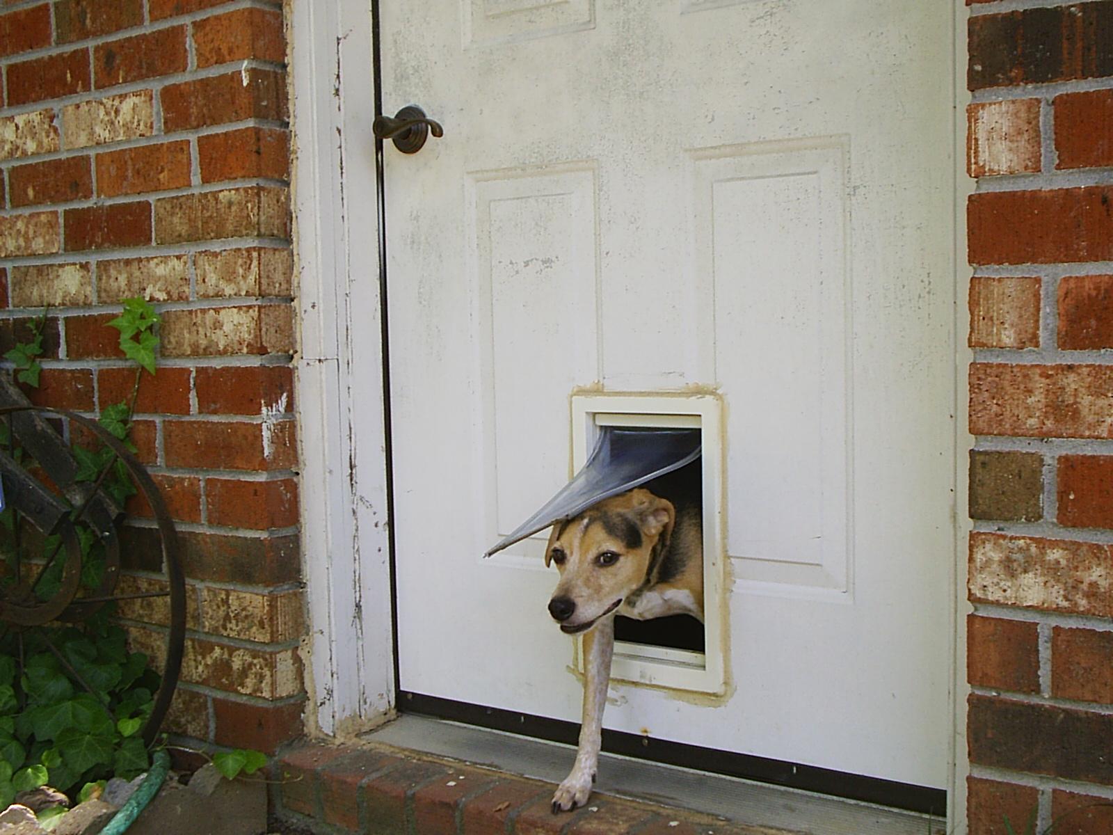 Cat Flap Installation in Wooden Door or uPVC Door